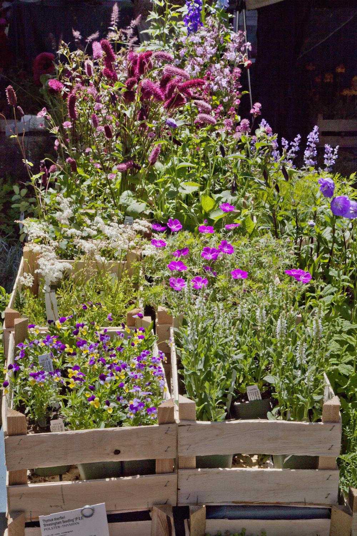 Gemütlich bummeln, angeregt plaudern, Schönes kaufen lecker schlemmen, an Blüten schnuppern und einfach nur das bezaubernde Flair genießen: Die Fürstenfelder Gartentage sind seit 17 Jahren so beliebt wie eh und je.