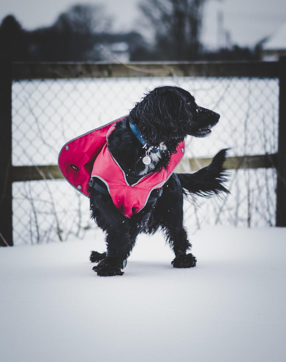 Charlie super dog (1 of 1).jpg