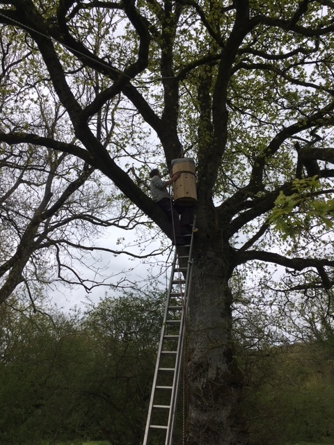 Matt installing what is called the Freedom Hive...