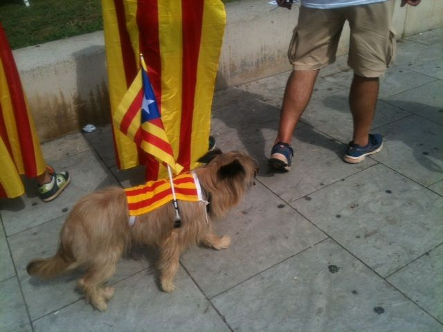 Even this dog barks in Catalan