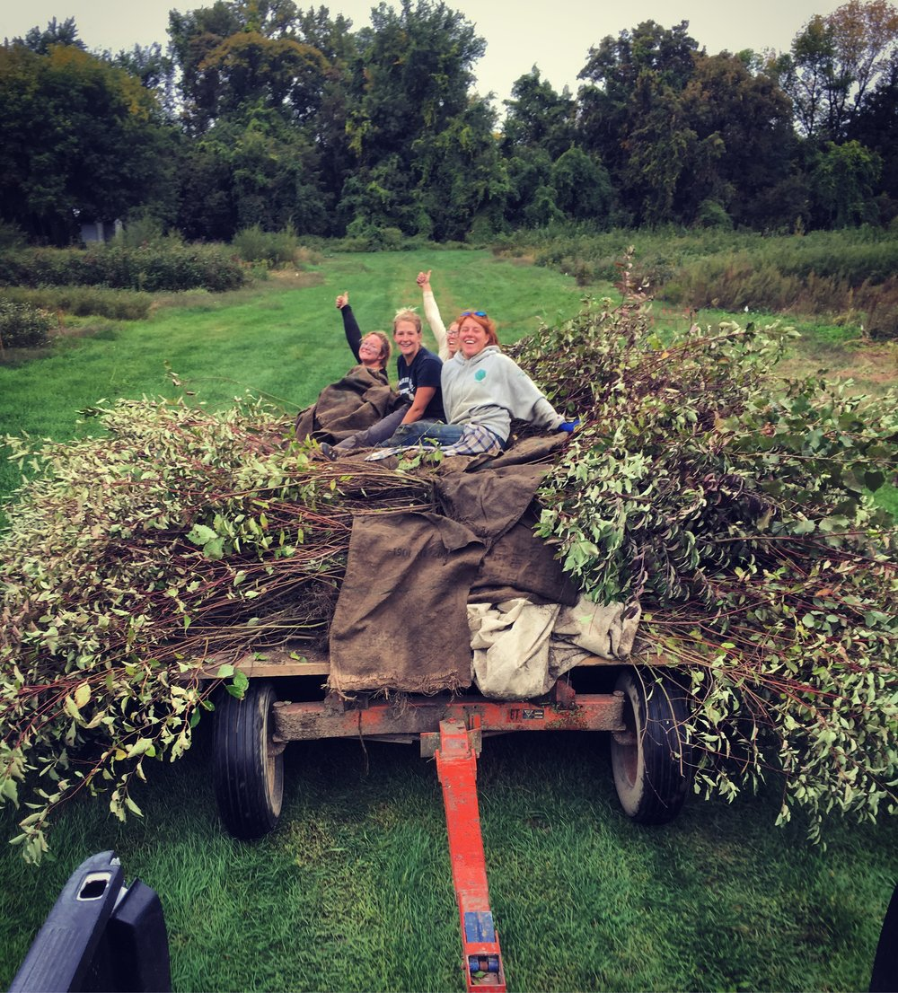 ICN staff with silky dogwoods harvested in the Intervale this fall.