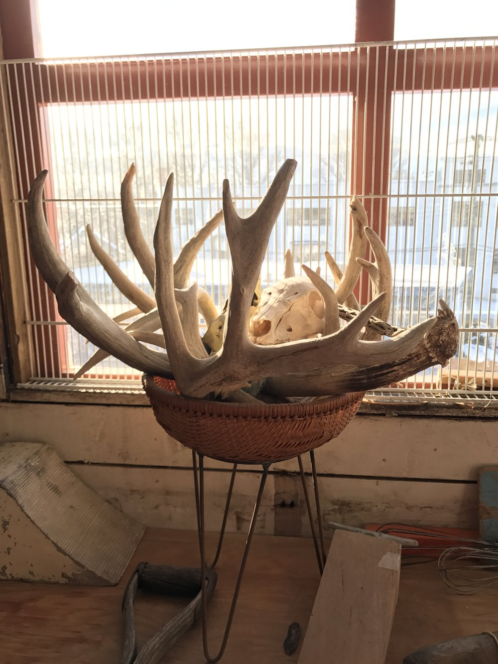 Antlers and Skull from around the studio.