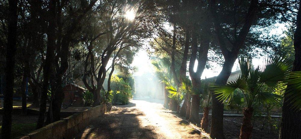 Felix-Eckardt_Mallorca_weg_zum_atelier_morgensonne.jpg