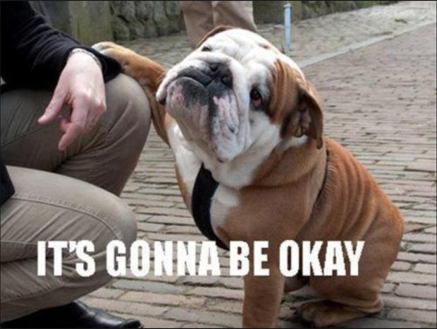 english-bulldog-meme-okay.jpg