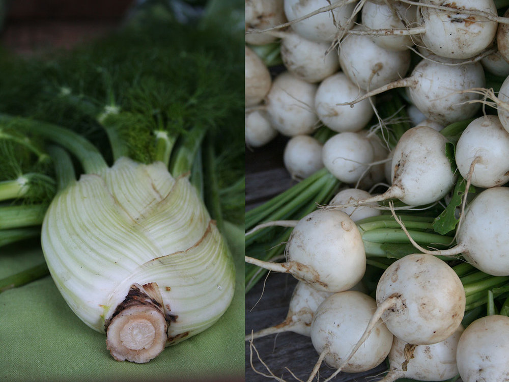 fennel & Hakurei turnips