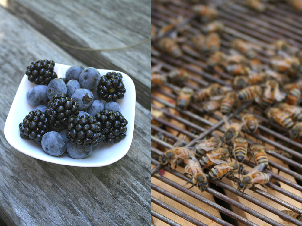 get-fresh-bees-berries.jpg