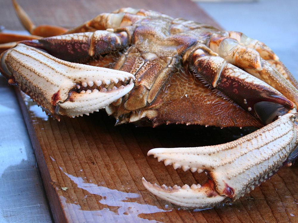 get-fresh-oceanwise-dungeness-crab