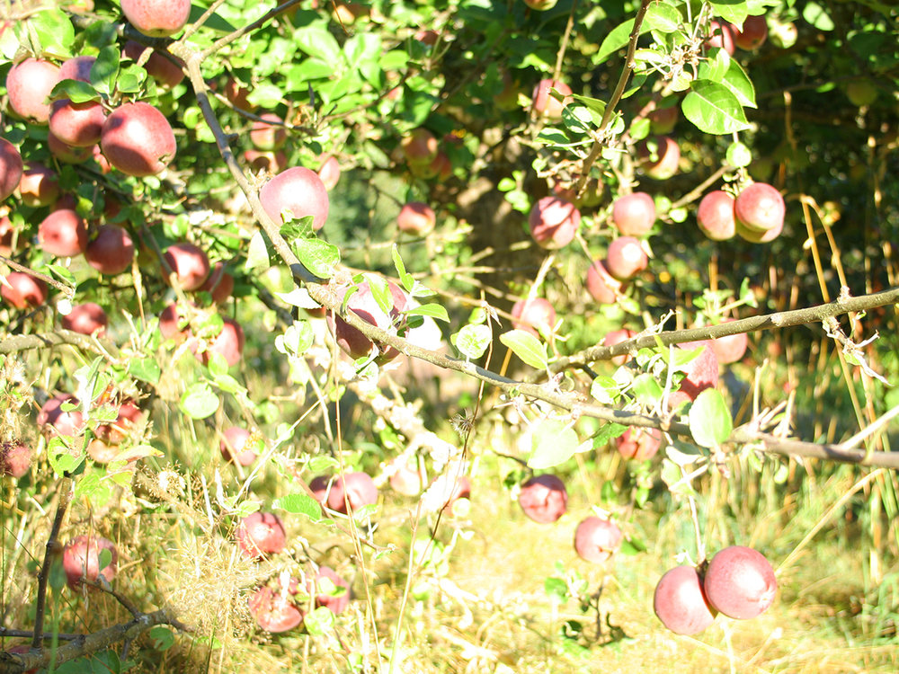 get-fresh-organic-apples