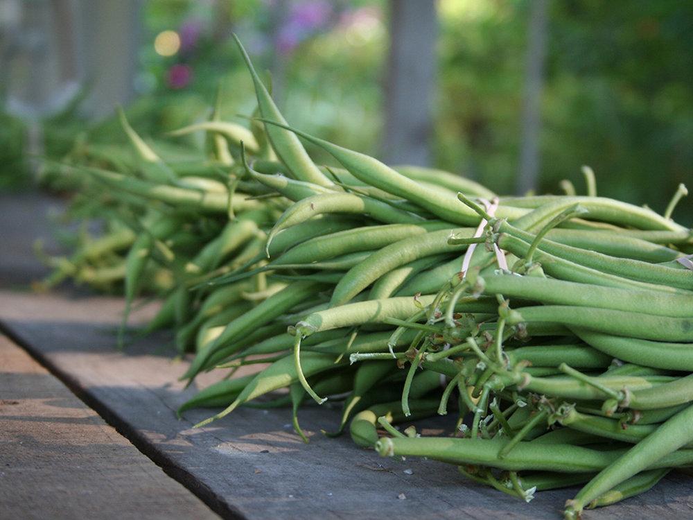 get-fresh-green-beans
