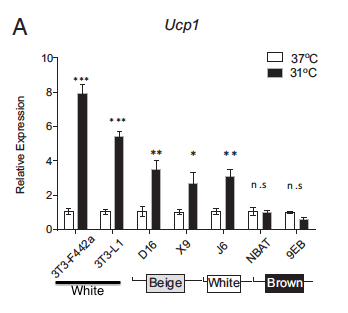 Fig 3a from the paper. It helps to compare white vs beige vs brown. D16, J6 etc are just names of different cell lines.