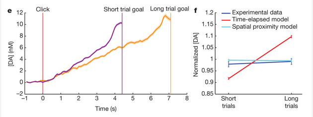 Left: Peak dopamine levels are the same regardless of trial length. Right: But it did correlate with how close the rats were to the goal. Source: Fig 2