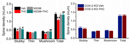 Spines come in all shapes and sizes. Grey bar: COX-2 inhibitor alone; Green bar: THC+COX-2 inhibitor