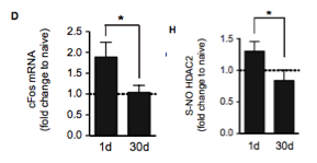 "S-NO of HDAC2 dissociates it from its gene targets (for example, cFos), functionally ""inactivating"" it in terms of modifying gene expression. The enzyme itself still retains its activity."