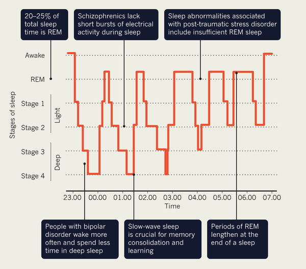Stages of sleep. Source: Nature Outlook Special Issue on Sleep. http://www.nature.com/nature/journal/v497/n7450_supp/full/497S2a.html