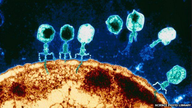 The little bubble-headed creatures sitting on that giant sun-like bacteria? Phages. They're the creepiest cutest things ever. You can see some of them injecting their DNA (or RNA) into the bacteria, like skinny blue poops.