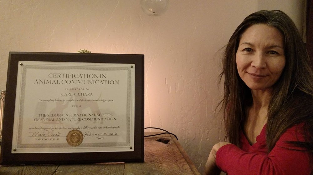 animal communication certificate