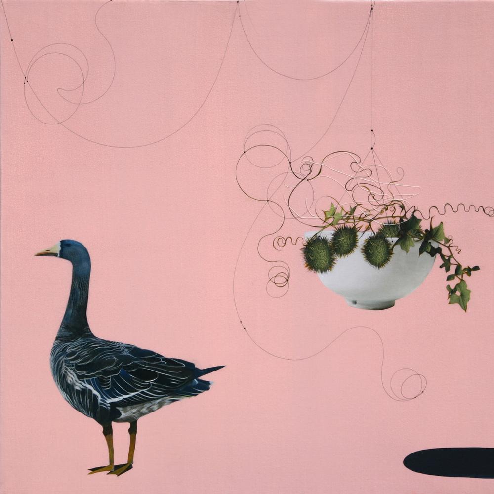Kaour Mansour - Wild Cucumber & Bird - 20x20.jpg
