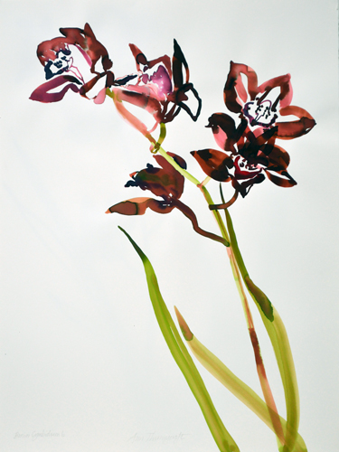 Brown-Cymbidium-6-30x22wc.jpg