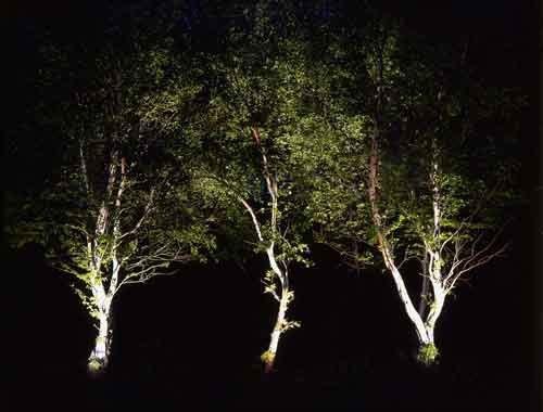 L_tree.jpg