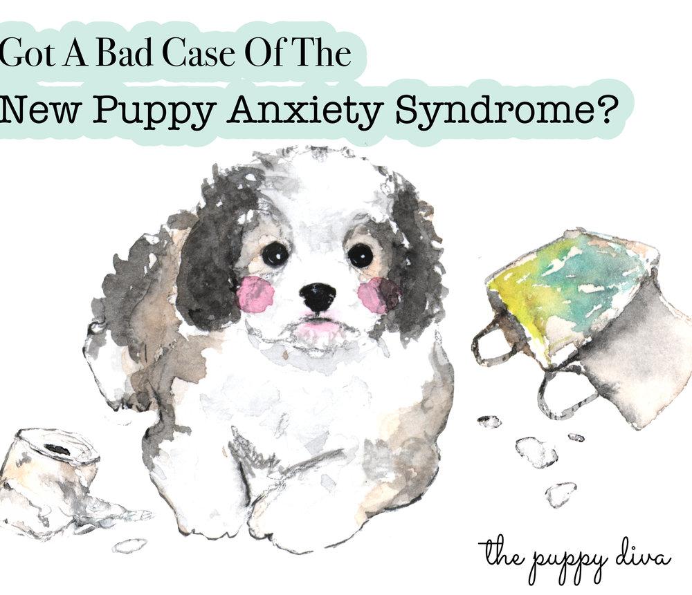 Cavachon Puppy Training Book
