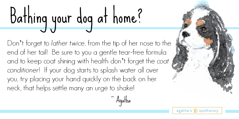 Ask+Agatha+Give+your+puppy+a+great+bath!.jpeg