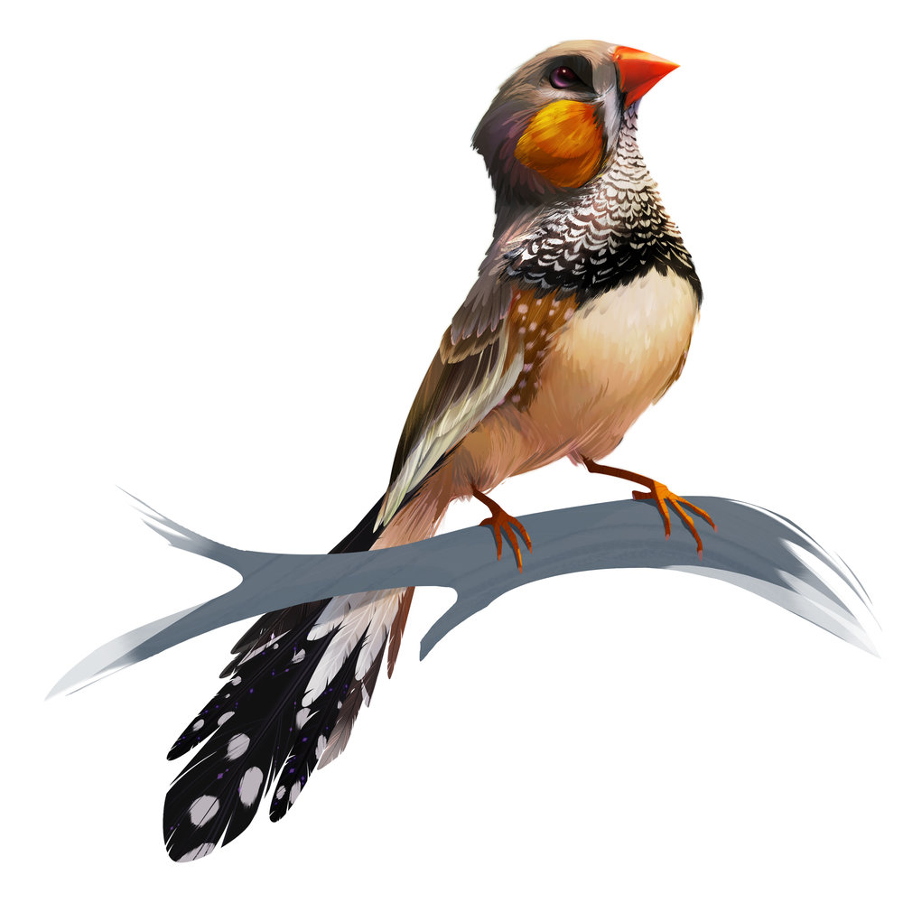 W_Birds_Print_Zeebra.jpg
