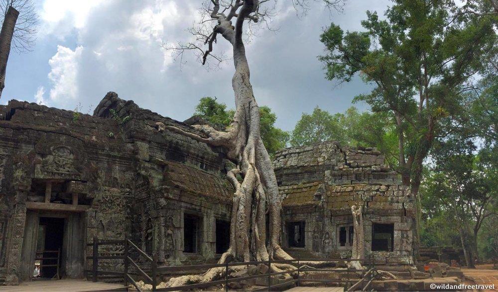 Ta Prohm temple- Cambodia (Angkor Wat)