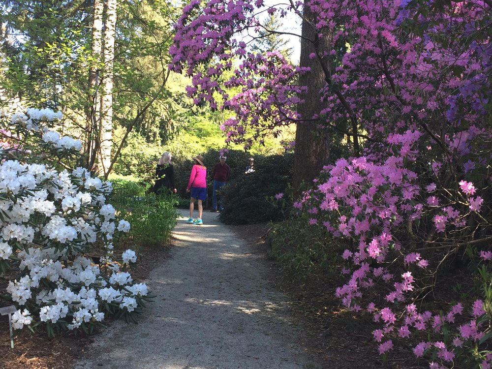 Image Courtesy Of Rhododendron Species Botanical Garden
