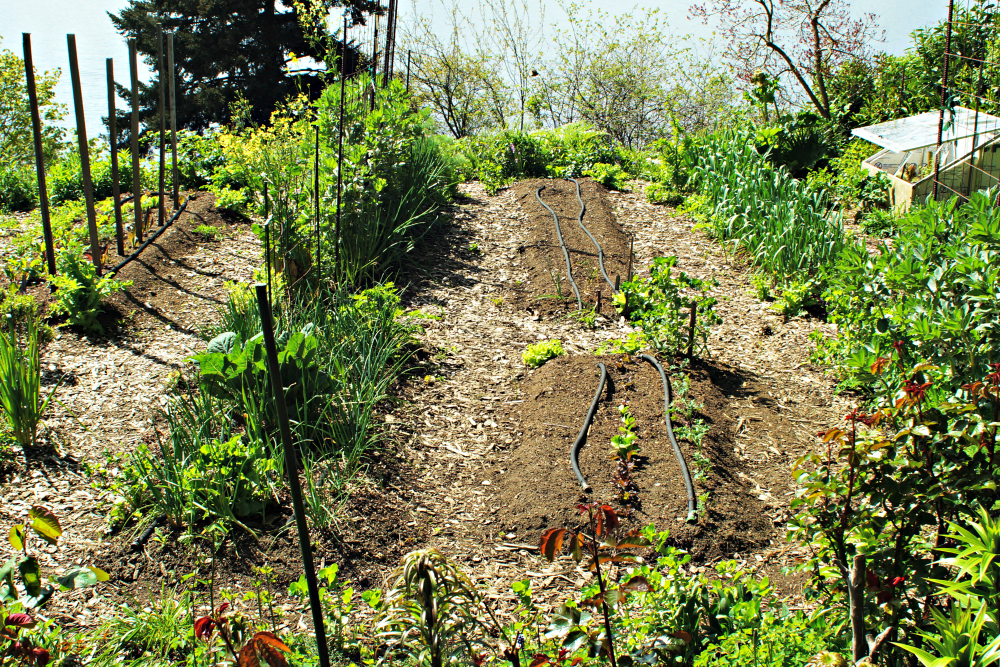 The author's raised bed vegetable garden.