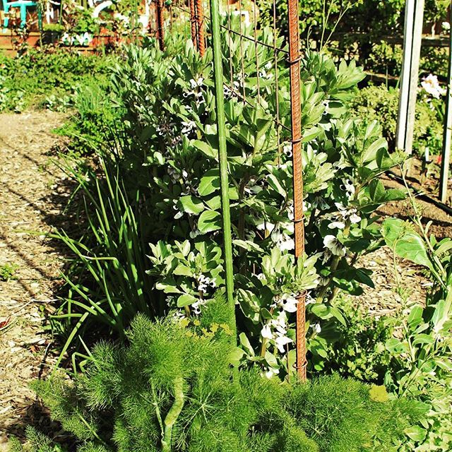 Gretchen has been getting ready for spring vegetables; how about you? Read about her process on our blog: http://ow.ly/Ckm230boJ3l #westseattlegardentour . . . #westseattle #pnwgardening #gardening #urbangarden #instagardenlovers #gardensofinstagram #ediblegardening #vegetablegarding #greenthumb #growsomethinggreen #growwhatyoueat
