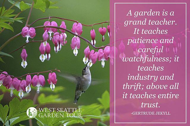Indeed. #gardeningquotes #gardeninspiration #quotestoliveby . . . #quotes #quoteoftheday #gardenlife #westseattle #pnwgardening #gardening #urbangarden #instagardenlovers #gardensofinstagram #ilovegardening #westseattlegardentour