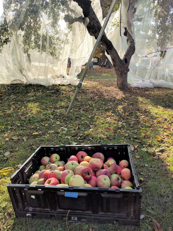 Photo courtesy of City Fruit
