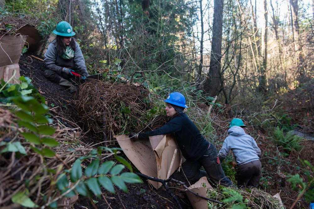 Photo courtesy of the Fauntleroy Watershed Council