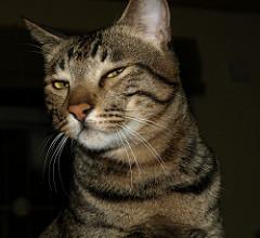 sly cat.jpg