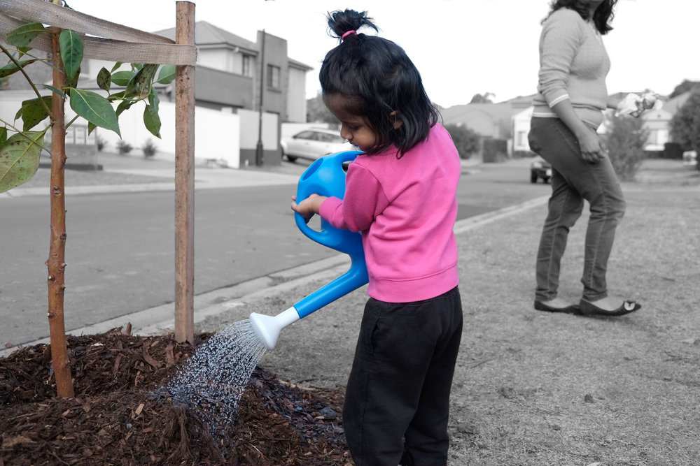 Cool Streets is an intiative to empower communities to cool the planet, one street at a time.