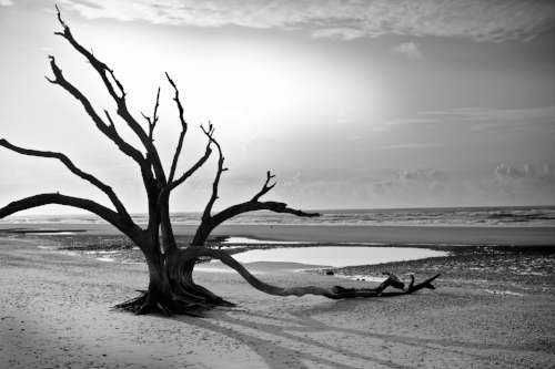 I photographed this tree dozens of times on this trip.  In retrospect, it seems the tree was the perfect parallel to our life at the time. An isolated, but strong existence, holding its ground in spite of the wind, sun, and salt air.