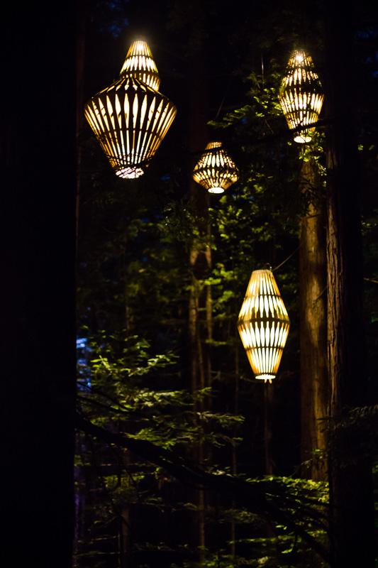 lights-redwoods-treewalk-sequoia-california-redwoods-amalia-bastos-photography-new-zeland.jpg
