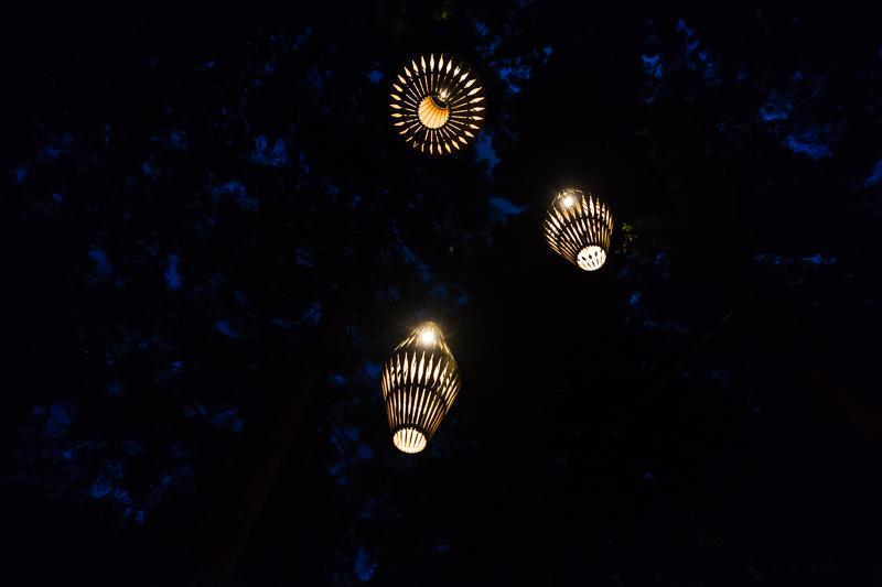 lights-redwoods-treewalk-rotorua-new-zealand-north-island-roadtrip-amalia-bastos-photographer.jpg