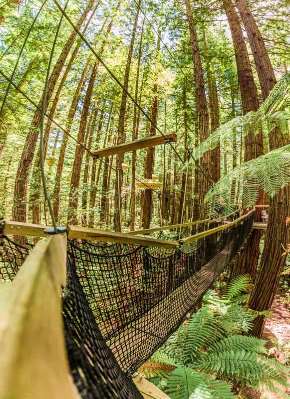 panorama-redwoods-treewalk-tourism-travel-new-zealand-north-perspective-walkways-elevated-amalia-bastos-photography.jpg