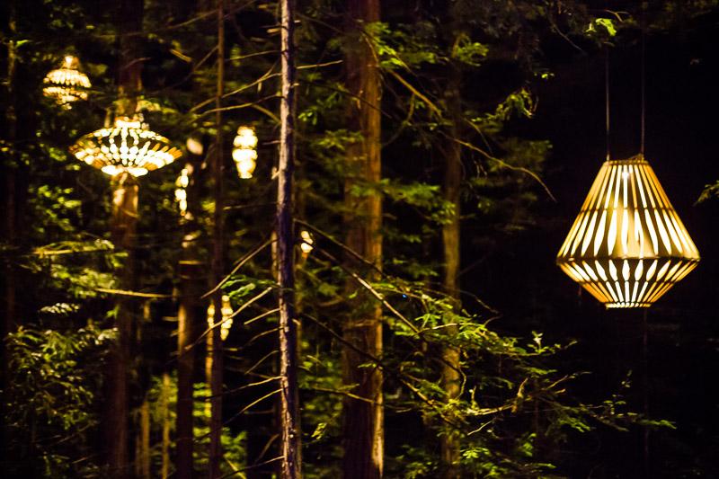 redwoods-treewalk-night-evening-dark-lamps-lights-amalia-bastos-photography.jpg