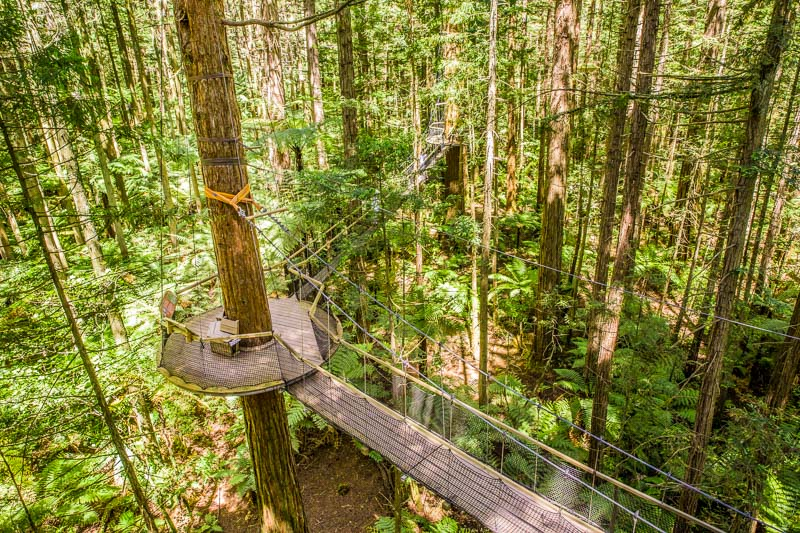 redwoods-treewalk-platform-rotorua-new-zealand-north-island-roadtrip-amalia-bastos.jpg