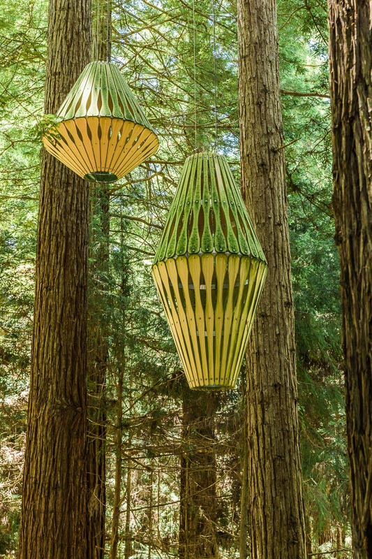 sequoia-sempervirens-redwoods-treewalk-new-zealand-north-island-amalia-bastos-photography.jpg