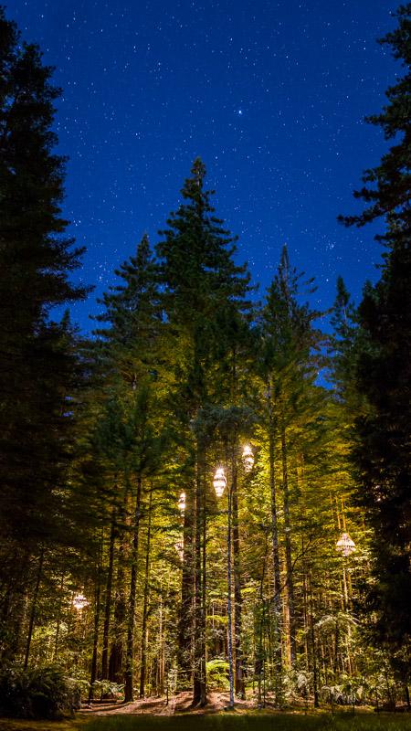 redwoods-treewalk-night-stars-travel-trip-tourism-new-zealand-north-island-amalia-bastos-photography.jpg