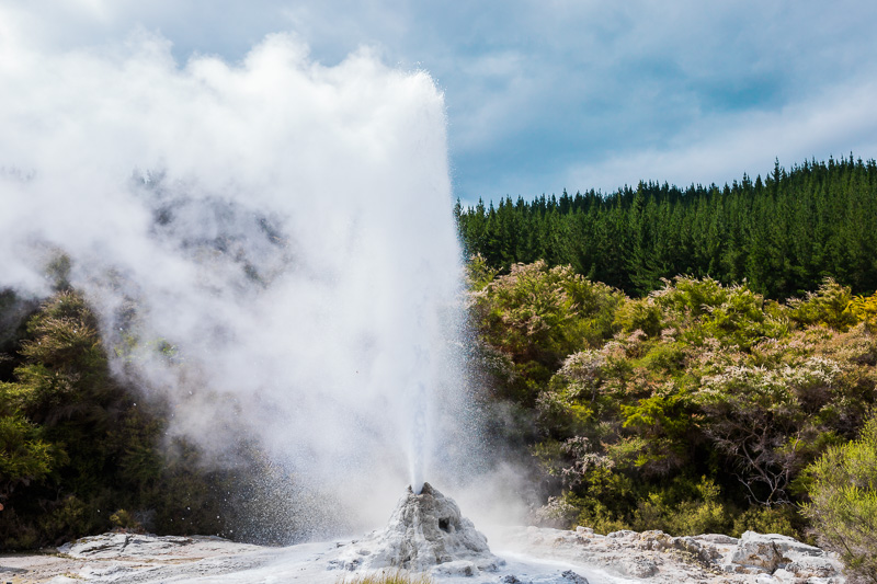 lady-knox-geyser-amalia-bastos-photography-rotorua-geothermal-eruption-travel.jpg