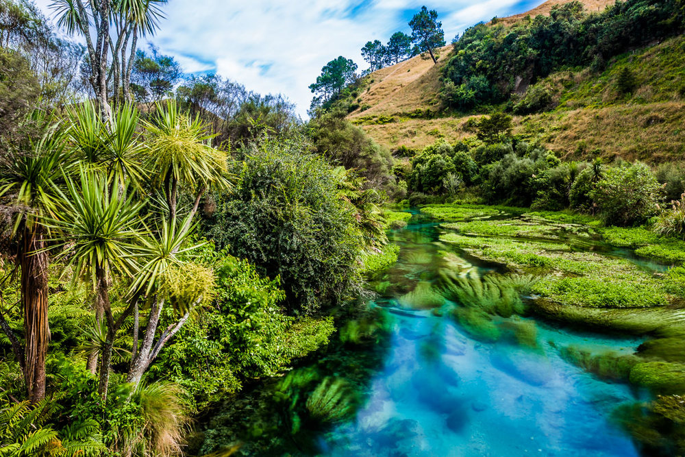 te-waihou-blue-springs-walkway-hamilton-new-zealand-nz-north-island.jpg