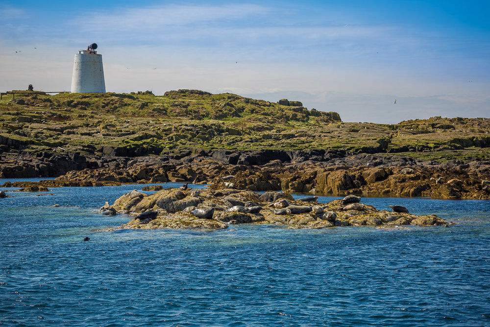 isle-of-may-scotland-st-andrews-travel-cruise-seals-island-lighthouse.jpg