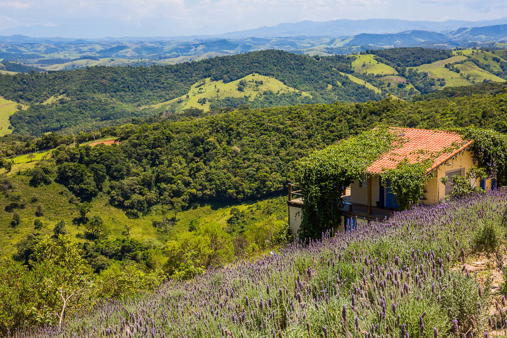 countryside-brazil-sao-paulo-rio-de-janeiro-lavandario-lavender-farm-rural.jpg
