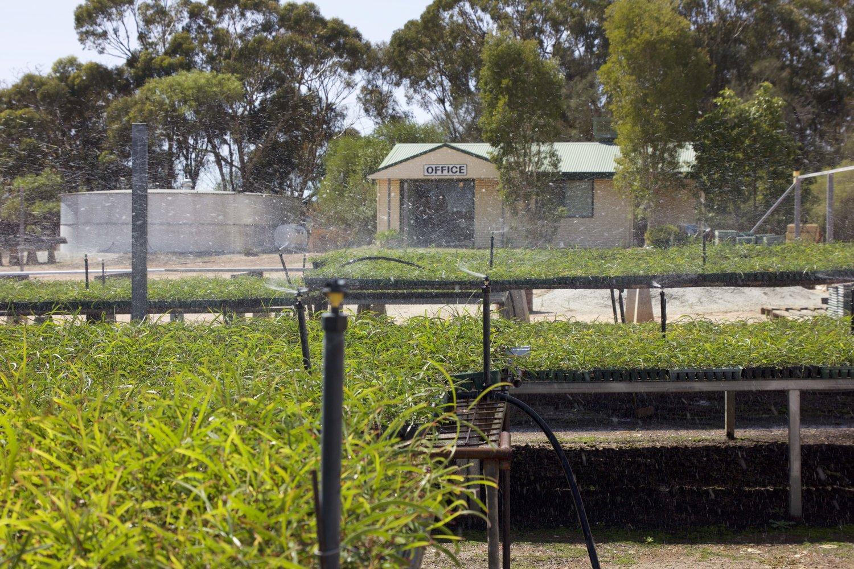 WASP - Sandalwood Plantation Industry
