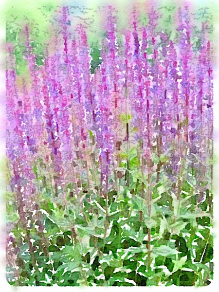 LavenderWC