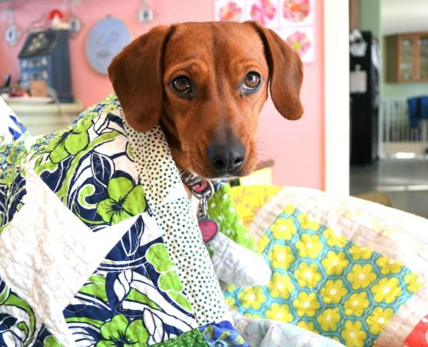 Hound Quilts